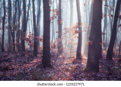 Misty, hazy, foggy and sunlit forest
