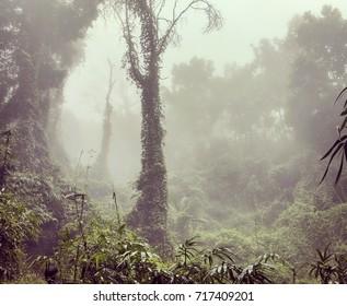 Misty jungle mountain