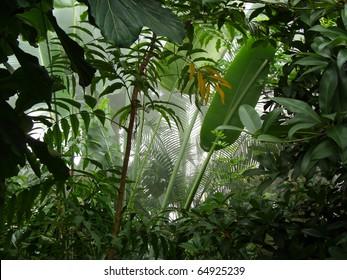 Misty jungle / rainforest scene