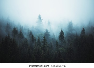 Misty landscape with fir forest in hipster vintage abstract retro style