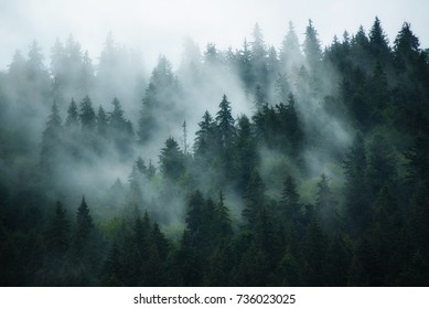 Misty landscape with fir forest in hipster vintage retro style - Shutterstock ID 736023025