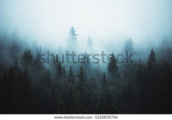 Туманный пейзаж с еловой лес в хипстер старинные абстрактный ретро стиль