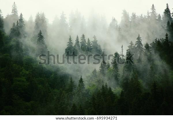 Туманный пейзаж с еловой лес в хипстер старинные ретро стиль