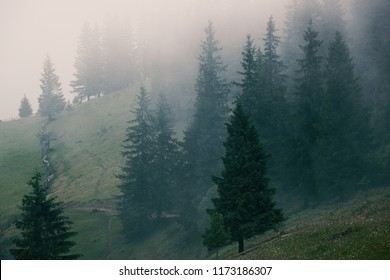 Misty landscape with fir mountain forest in hipster vintage retro style