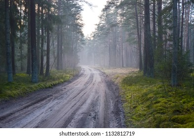 Misty Lithuanian forest in early winter