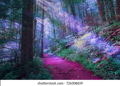 Misty Magical Color Forest
