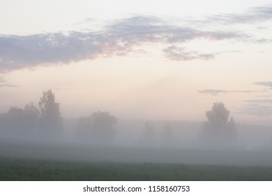 Misty meadow landscape at dawn