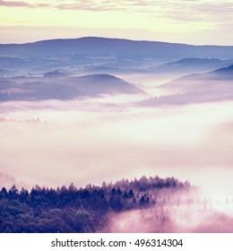 Misty melancholy daybreak in beautiful fairy valley. Peaks of rock trim creamy foggy clouds. Fog is pink  shinning . The fog is swinging between trees.