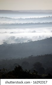 Misty morning in Brazilian rainforest
