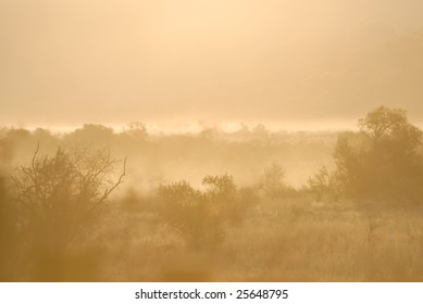 Misty Morning Bushveld Scene