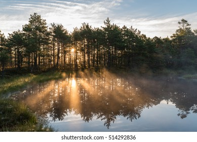 Misty morning by the bog lake with rising sun behind the trees.
