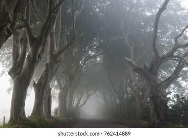 Misty morning at the Dark Hedges