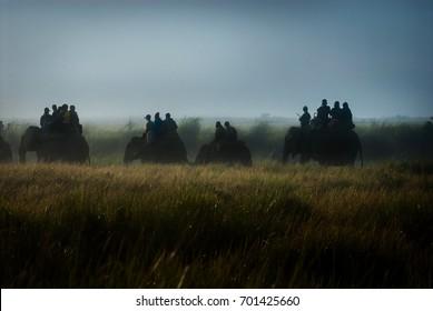 Misty Morning Elephant Safari, Kaziranga National Park, Gologhat District, Assam State, India.