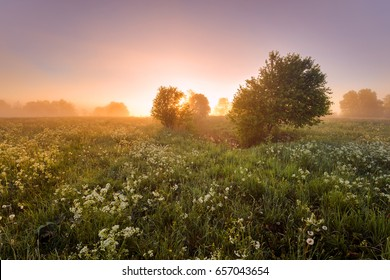 Misty morning in the field. Nature of Estonia. Amazing sunrise.