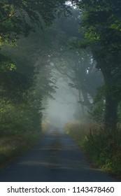 Misty morning in forest in East Devon