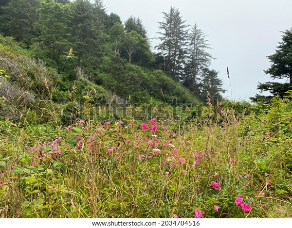 a misty morning forest glade with bright blooming pink and yellow wild flowers