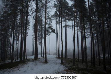 misty morning in the forest in the winter time