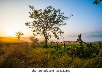 Misty morning in highland