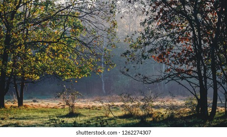 Misty morning landscape in the colorful autumn forest