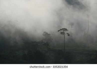Misty morning light in rainforest, Bendum, Mindanao, Philippines