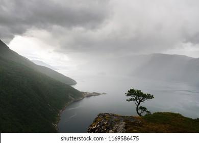 Misty morning on Tingvollfjorden flord Vettamyra , More og Romsdal county, Norway