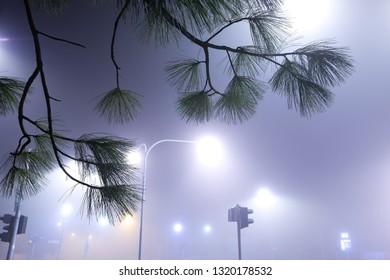 misty morning, pine at fog, city Kolín, Czech republic,