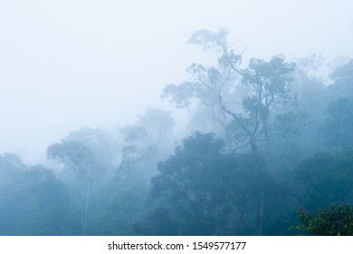 misty morning in the rainforest of Madagascar