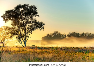 A Misty Morning in Rural Australia.  Tarome, south of Brisbane.