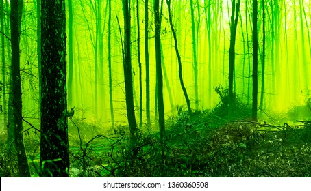 Misty morning in the spring forest. Mystic fairy-tale forest in the morning. Tinting in green