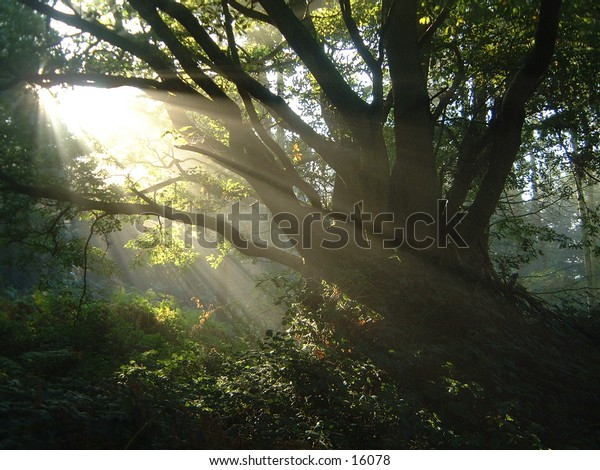 misty morning sunlight through tree branches