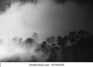 misty morning sunrise at Doi Ang-khang mountain, chiangmai : thailand