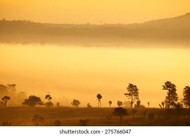 misty morning sunrise in mountain at Thung Salang Luang National Park Phetchabun,Thailand