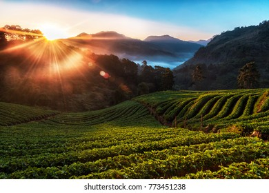 Misty morning sunrise in strawberry garden, Doi angkhang Mountain, Chiang Mai Province, Thailand