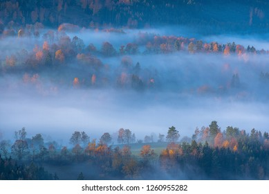 Misty morning with sunrise in a valley of Bohemian Sumava national park. Detail of forest, landscape of Czech Republic