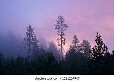 Misty morning in Yellowstone National Park.