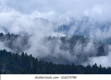 Misty mountain forest with the evergreen conifers view and low lying cloud near Swift Reservoir. USA Pacific Northwest, Washington.
