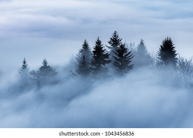 Misty mountain landscape in the morning, trees in fog, Poland