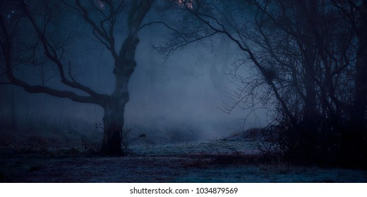 A misty and mysterious forest shivering on the slightly frozen ground in the early winter morning light