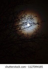 A misty night landscape. A white moon with a halo is seen behind branches of a tree forming an ornament