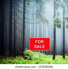 Misty pine forest with FOR SALE sign - Conceptual image