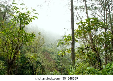 Misty rain forest in Indonesia with