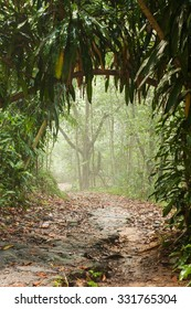 Misty rain forest on Borneo with tunnel path