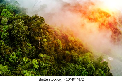 Misty rainforest, aerial view flying through the clouds