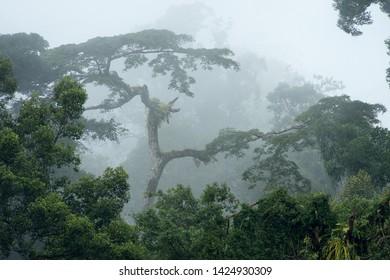 Misty Rainforest in Datum Valley Borneo