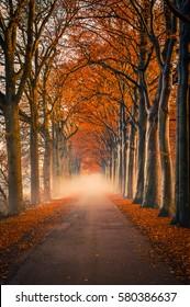 Misty road in autumn