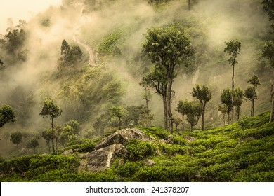 Misty road on tea plantation in Sri Lanka