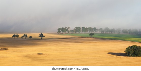 Misty rural landscape view with a treeline