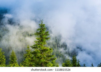 Misty scenery in the mountains in summer