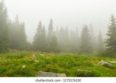 Misty scenery in the mountains in summer, in a fir tree forest