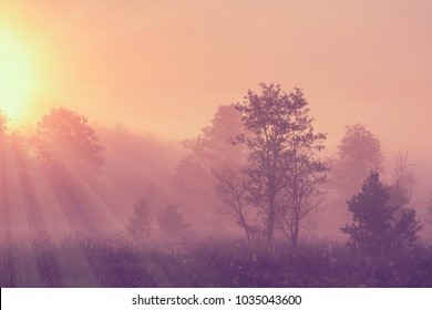 Misty spring morning landscape on bright sunrise with vivid sunbeams through trees on meadow. Wild scenery nature in the early spring morning. Summer outdoor.